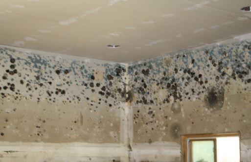 mold in basement